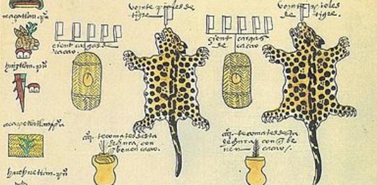 Ausschnitt aus dem Codex Mendocino, in dem die Mexica die Tribute der unterworfenen Völker festhielten. Die Beutel neben den Jaguarfellen sind Körbe mit einer fest bemessenen Anzahl von Kakaobohnen, die Gefäße darunter Kakaobecher aus Ton.